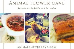 Animal Flower Cave Restaurant 2019.jpg