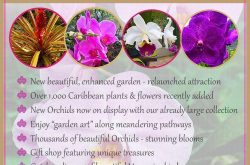 Orchid World Tours 2016.jpg