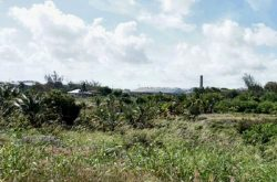 Searles Plantation.jpg