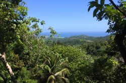 coco-hill-forest-barbados.jpg